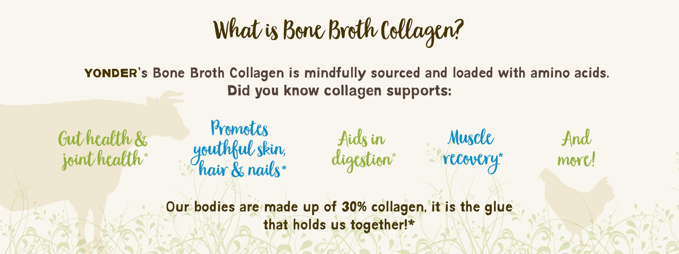 What is Bone Broth?